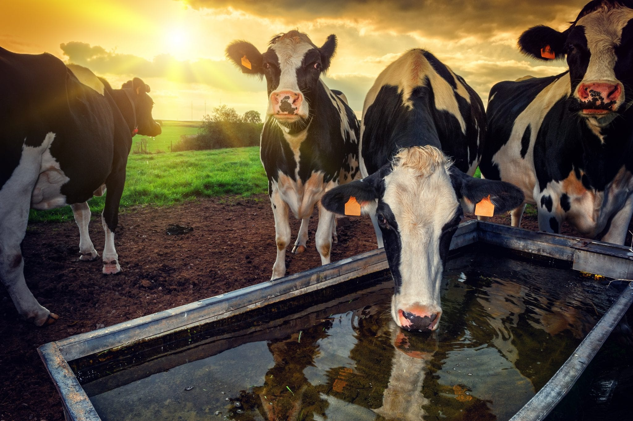 Calls for Government to ban widespread use of antibiotics in farming